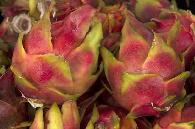 Pitahaya (dragon fruit) grown by Pedro Gallardo in Fallbrook.