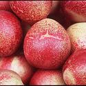 White-fleshed nectarines
