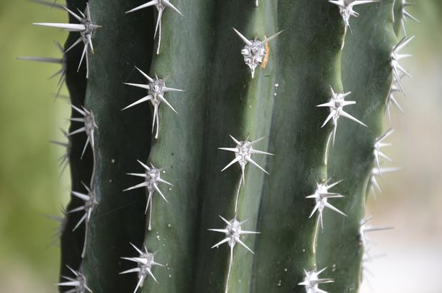 In addition to its extensive cactus and succulent gardens, the Living Desert in Palm Desert has a large collection of animals, including giraffes, camels and bighorn sheep.