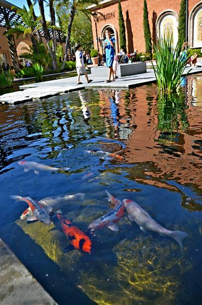 A koi pond at Fashion Island provides a peaceful spot for visitors to relax mid-shopping expedition.