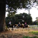 10. Griffith Park: By hoof and rail