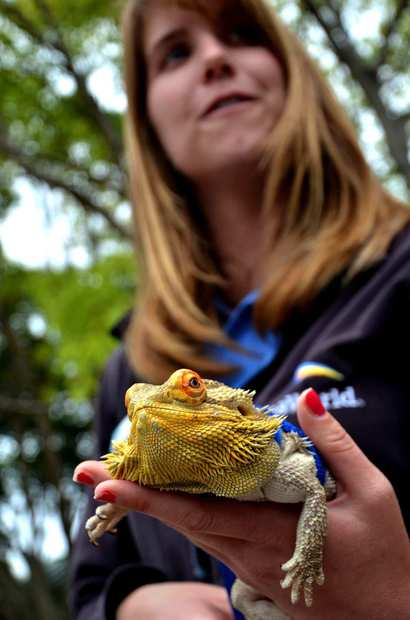 A staff member holds a lizard at SeaWorld San Diego.