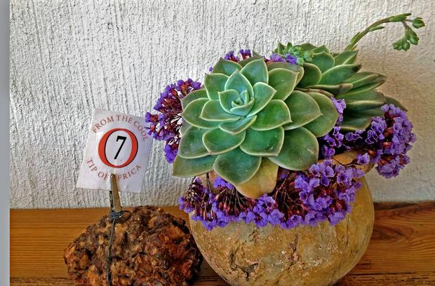 "A succulent from ""the cool tip of Africa"" graces a table at the Black Oystercatcher Winery's restaurant, in a new wine region of South Africa, the Elim district."
