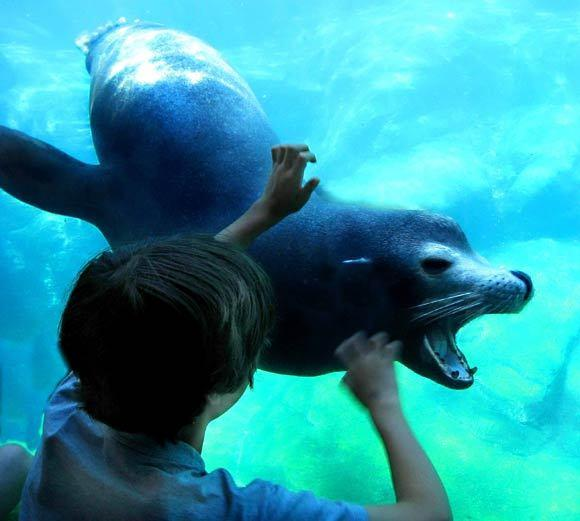 """My mother had never been to the Long Beach Aquarium, and even though she's 91, she still can get around on her own. So I took her there and, as usual, I took a million photos of everything we saw, and this young boy was so fascinated by the seal coming to the glass. It was as if they were long-lost buddies, greeting each other once again."""