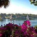 Your Scene: A garden view of the Nile's West Bank