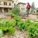 Urban farming in Altadena
