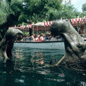 Jungle Cruise at Walt Disney World Magic Kingdom