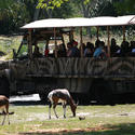 Kilimanjaro Safaris at Walt Disney World Animal Kingdom