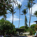 Travel to Hawaii -- Offbeat Maui