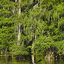 Travel to Louisiana -- Lake Martin Swamp