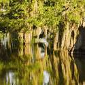 Travel to Louisiana -- Lake Martin swamp in Breaux Bridge