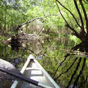 <b>Brooksville:</b> Pretty paddling on Withlacoochee