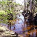 <b>Palmdale:</b> Fisheating Creek, hidden gem of pristine Florida