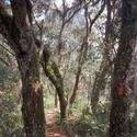 <b>Ocala National Forest:</b> You can hear the trees