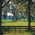 <b>Ocala:</b> Breeding ground for thoroughbreds