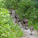 <b>Wekiwa Springs:</b> Hiking with turkeys