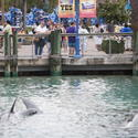 February 24 - Sea World employee killed by whale