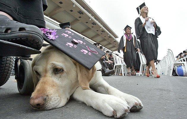 Job market casts shadow on graduation - The San Diego Union