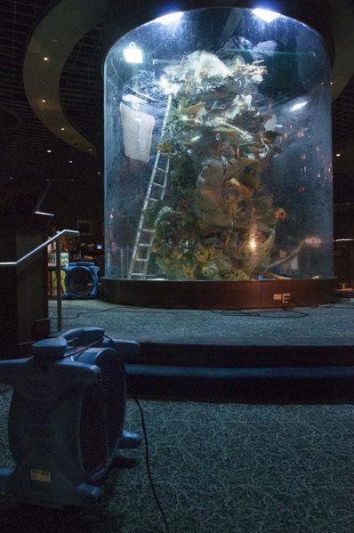 Gulfstream Aquarium Rupture Sun Sentinel