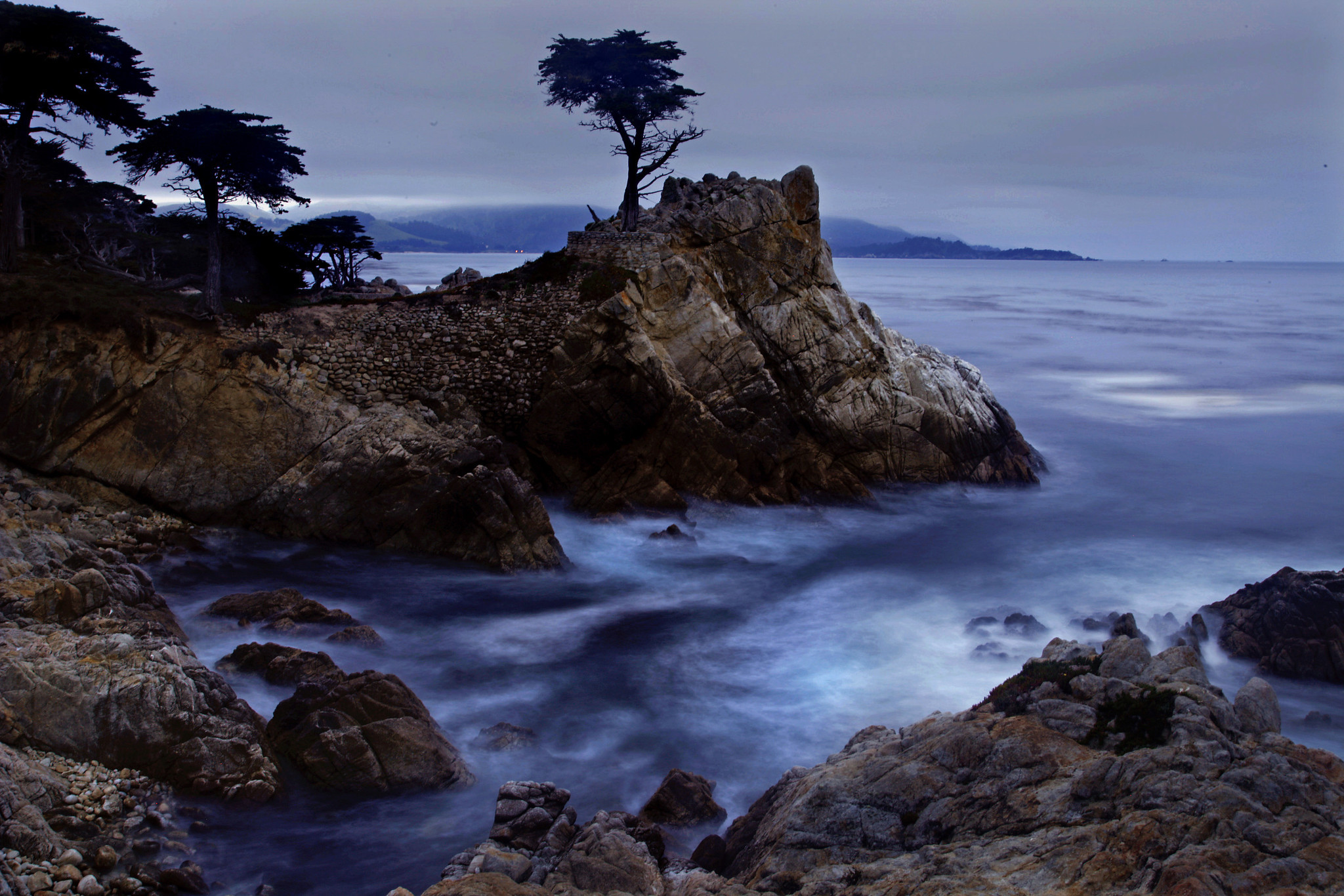 Standing Before The Lone Cypress La Times