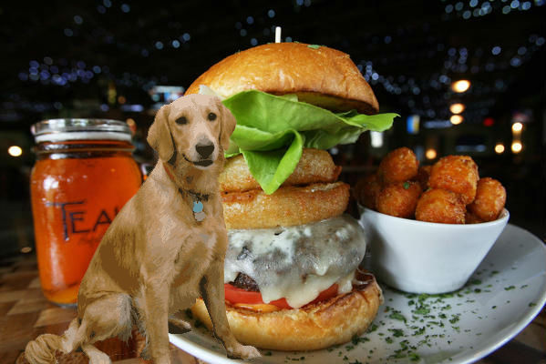 11 Best Dog Friendly Restaurants In Orlando Orlando Sentinel