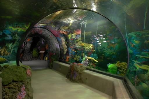 Virginia Beach approves aquarium 'Adventure Park' - Daily Press