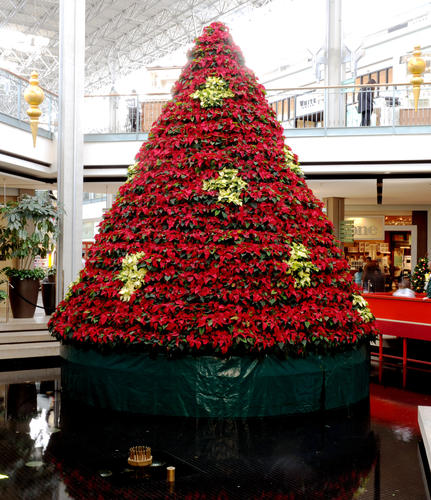 Columbia Christmas Tree: Poinsettia Tree At The Mall In Columbia