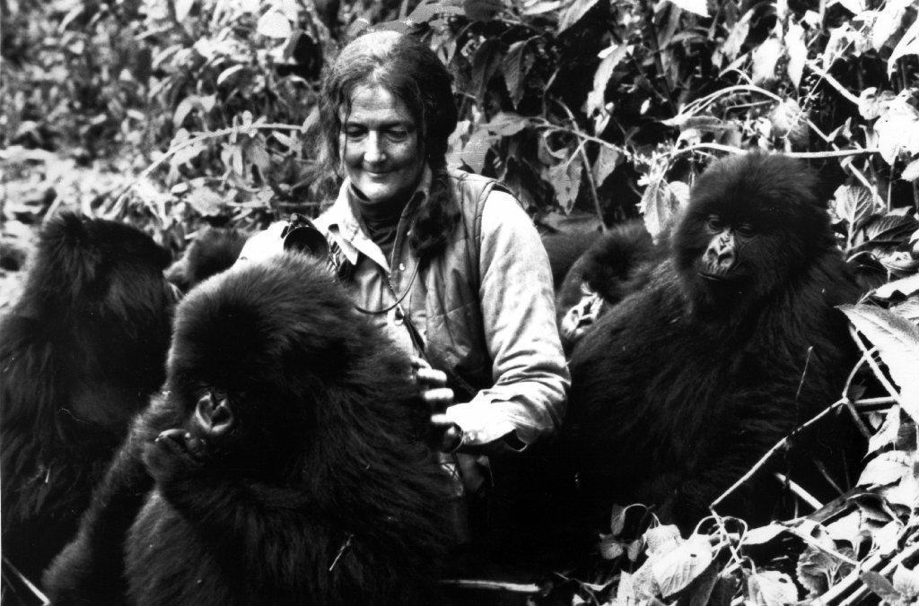 Dian Fossey Defender Of Gorillas Gets Birthday Doodle