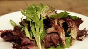 Winter greens salad with mustard seed vinaigrette