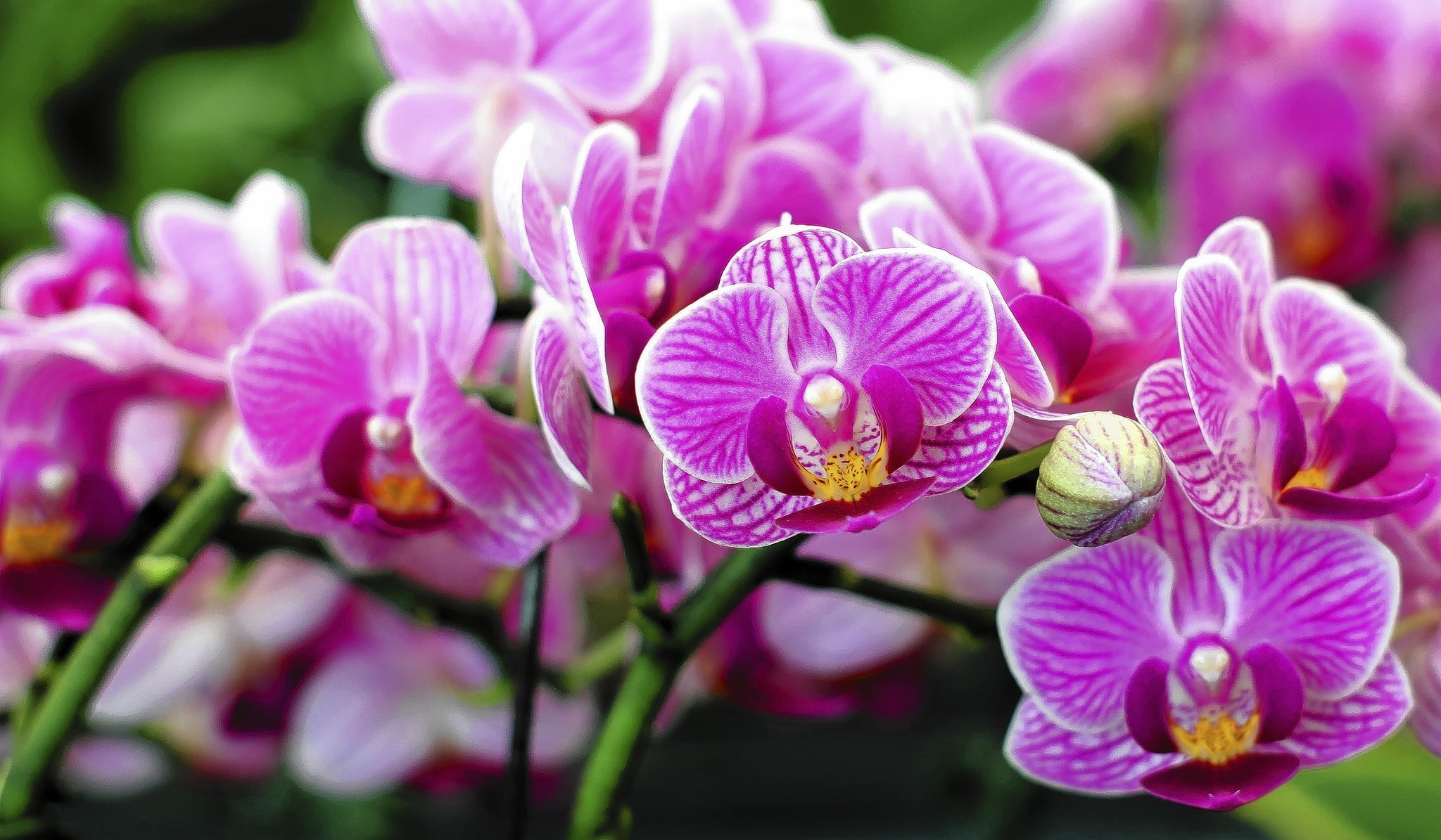 Expert tips on orchid growing tips for beginners Sun