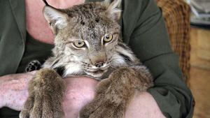 Animal wranglers add themselves to endangered species list
