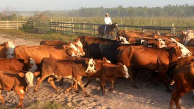 Pictures Deseret Ranch Cowboys Orlando Sentinel