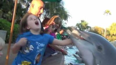 Dolphin Attacks Girl At Seaworld Orlando Dolphin Attacks