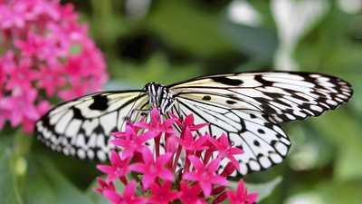 butterfly rainforest university of florida butterfly rainforest orlando sentinel - Uf Butterfly Garden