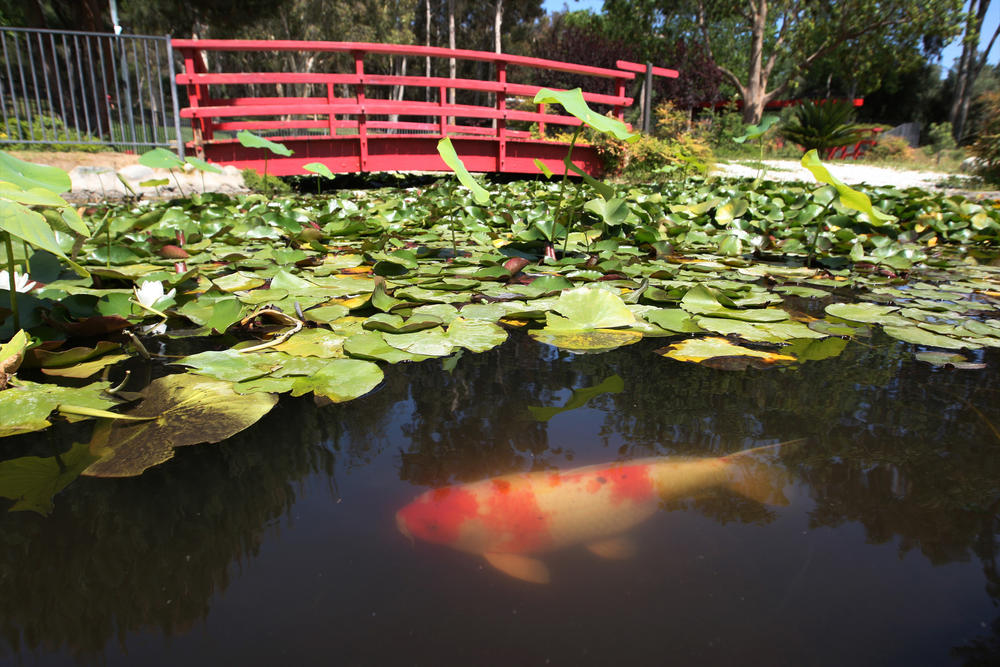 Los Angeles Japanese Garden: Hiking Kenneth Hahn To Surprising Views And A Glistening