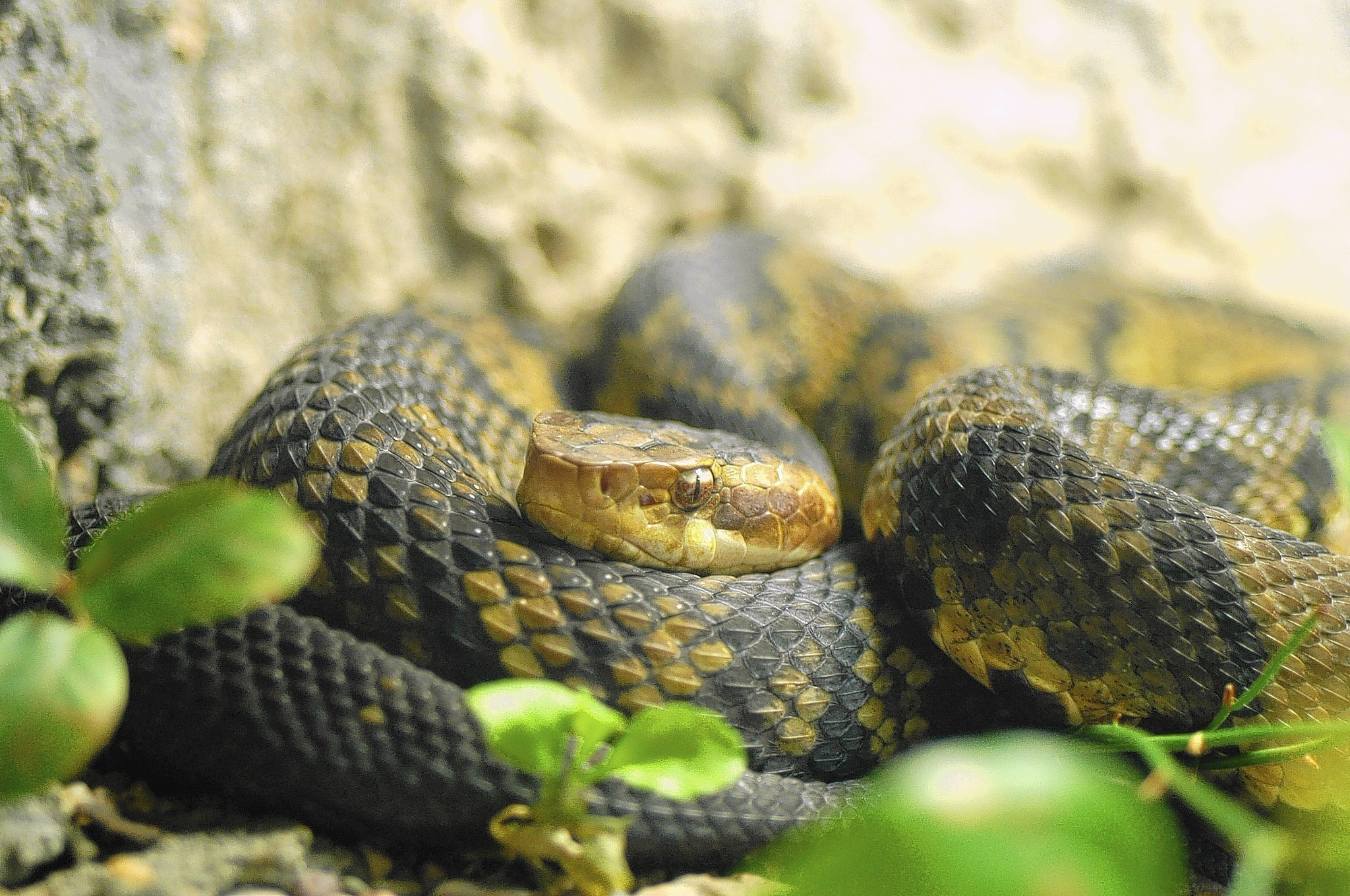 Snakes in your yard can be a healthy thing, especially if ...