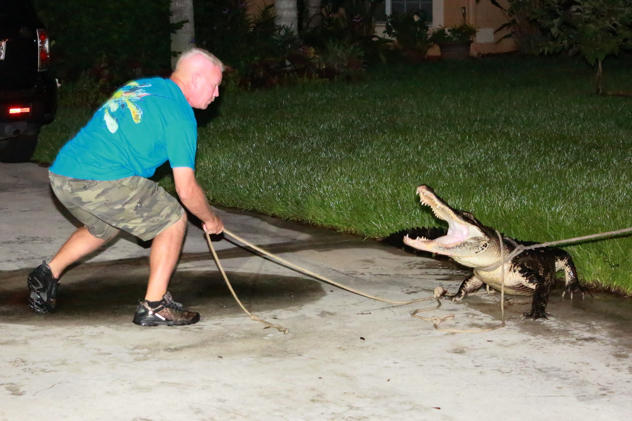 Gator Removed From Coral Springs Home Sun Sentinel