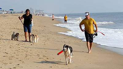 Beach Places That Welcome Your Dog Baltimore Sun