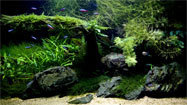 Aquascaping: Aquarium meets terrarium in the Japanese ...