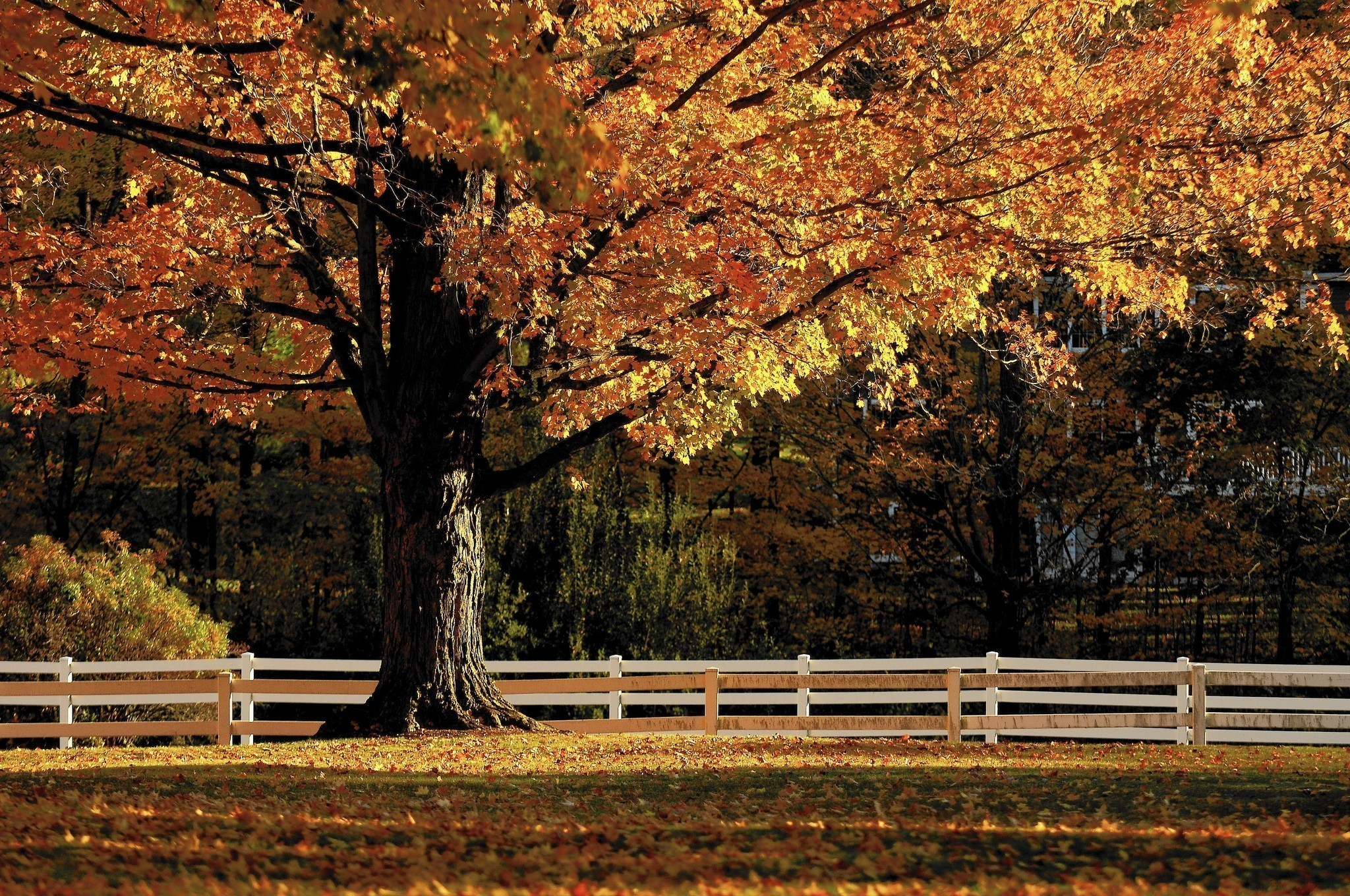 A Guide To The Autumn Palette Of Connecticut's Trees ...