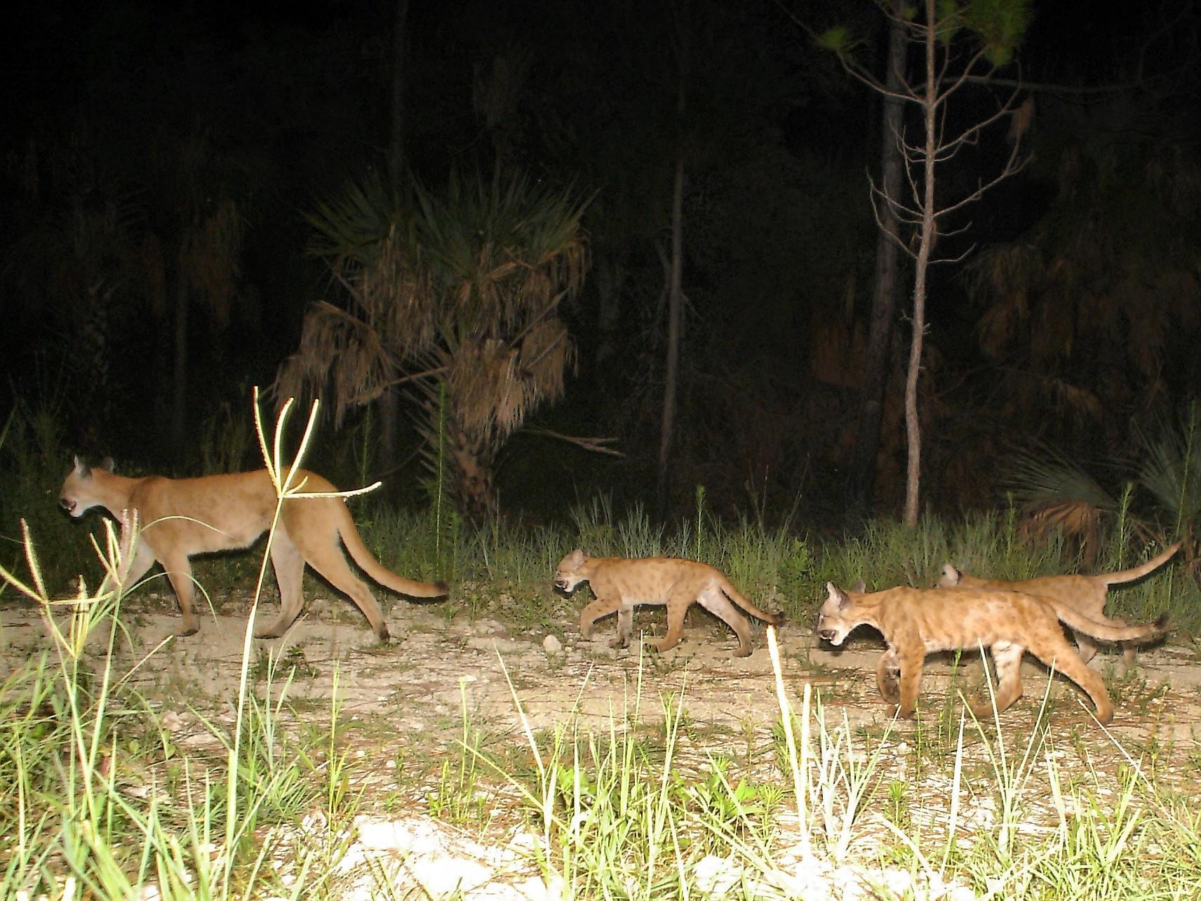 Florida S Purchase Of 10 Environmental Treasures Changed