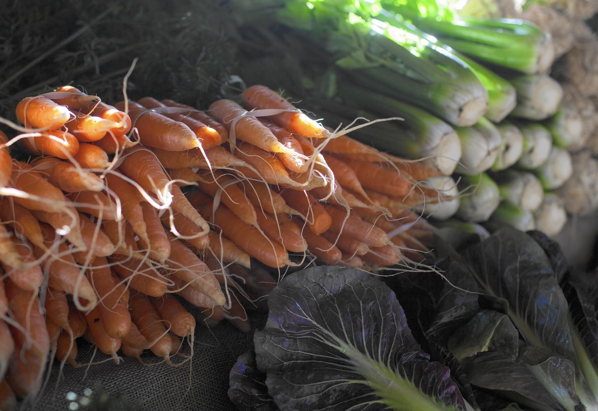Asian citrus psyllid proposal worries organic farmers