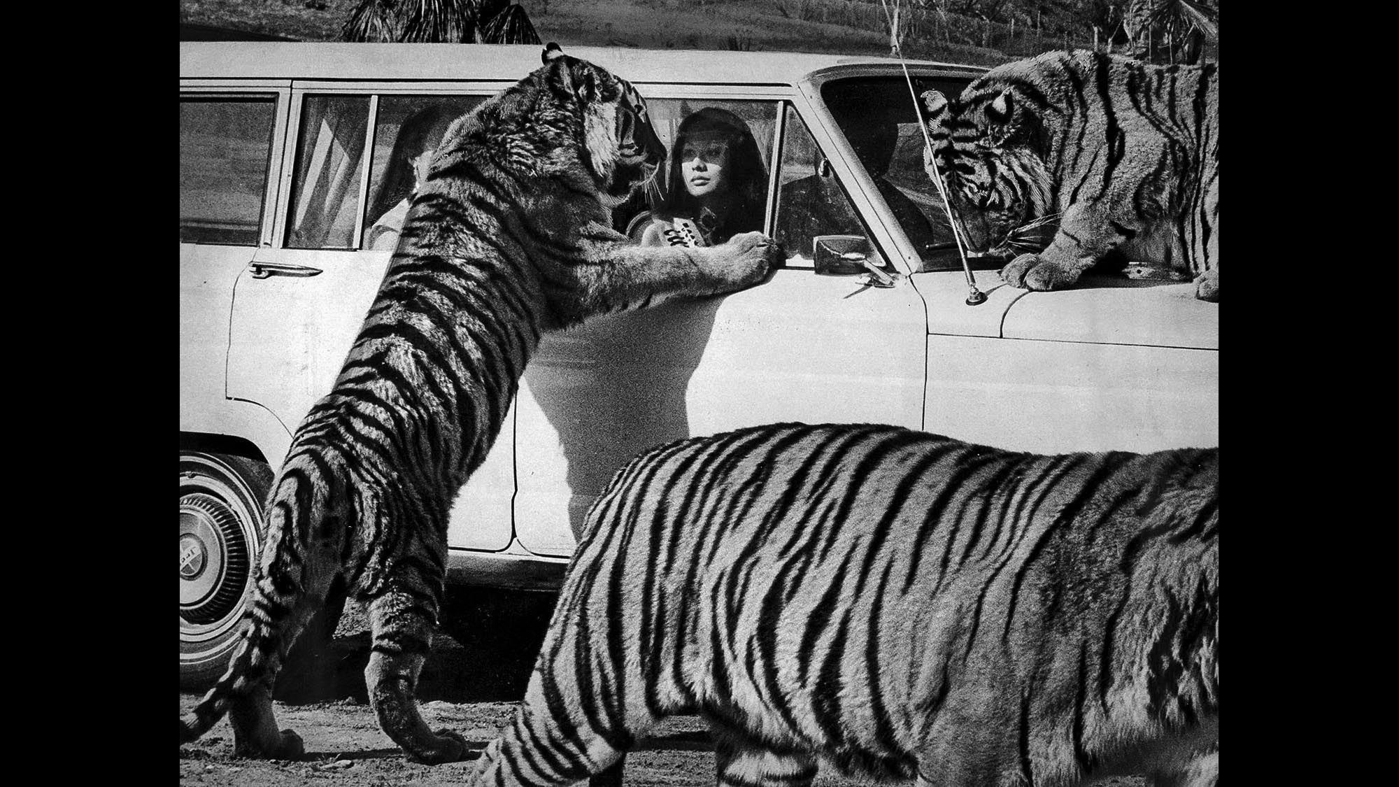 When African Beasts Roamed Irvine S Lion Country Safari
