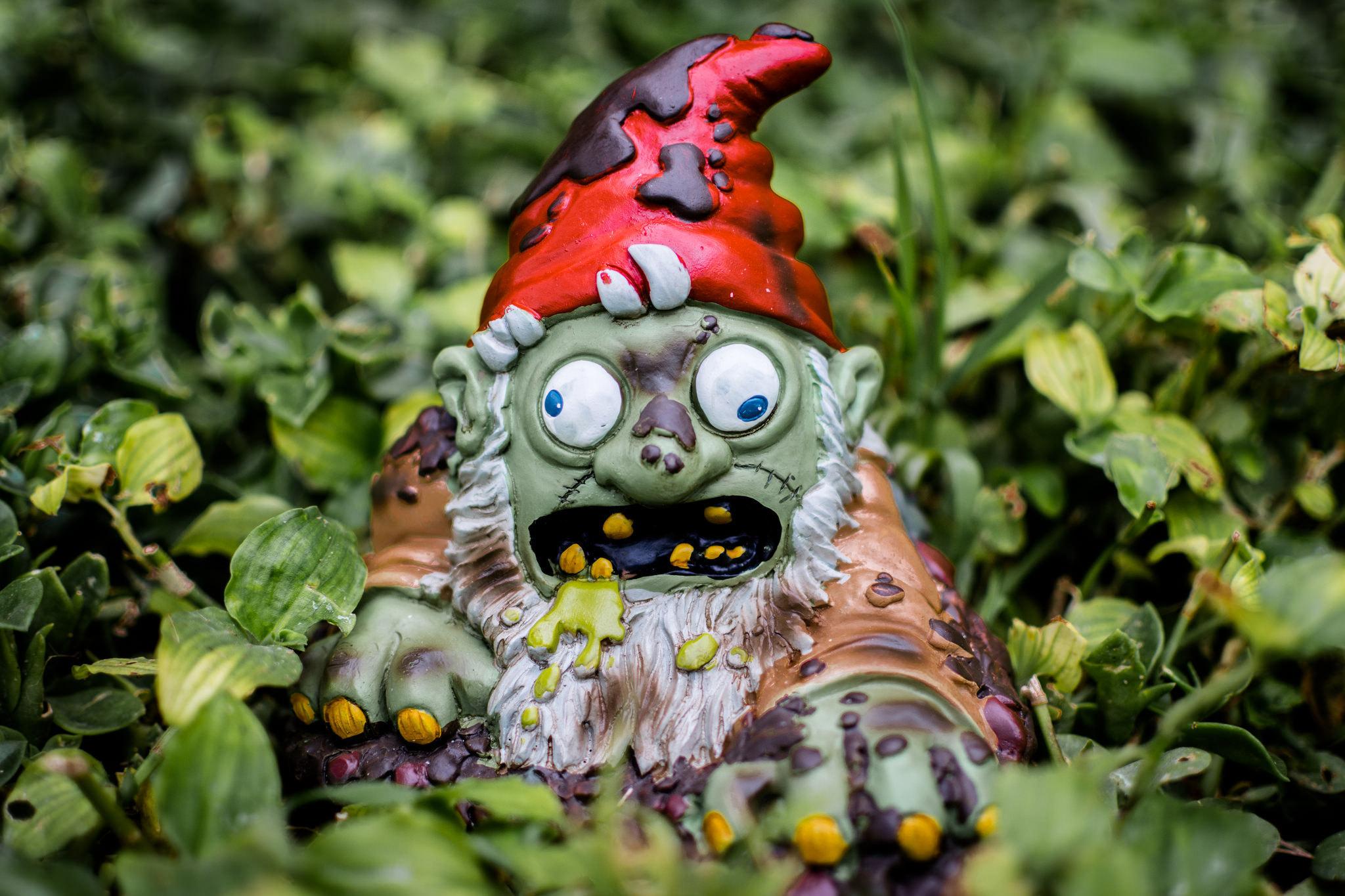 Gnome In Garden: Zombie Garden Gnome In Koreatown