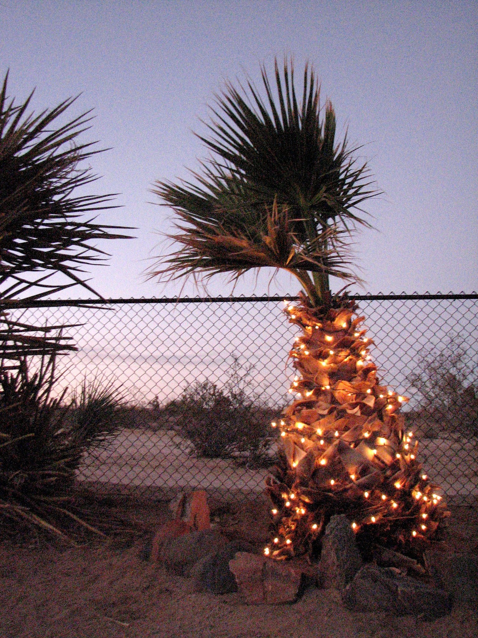 palm tree covered in christmas lights