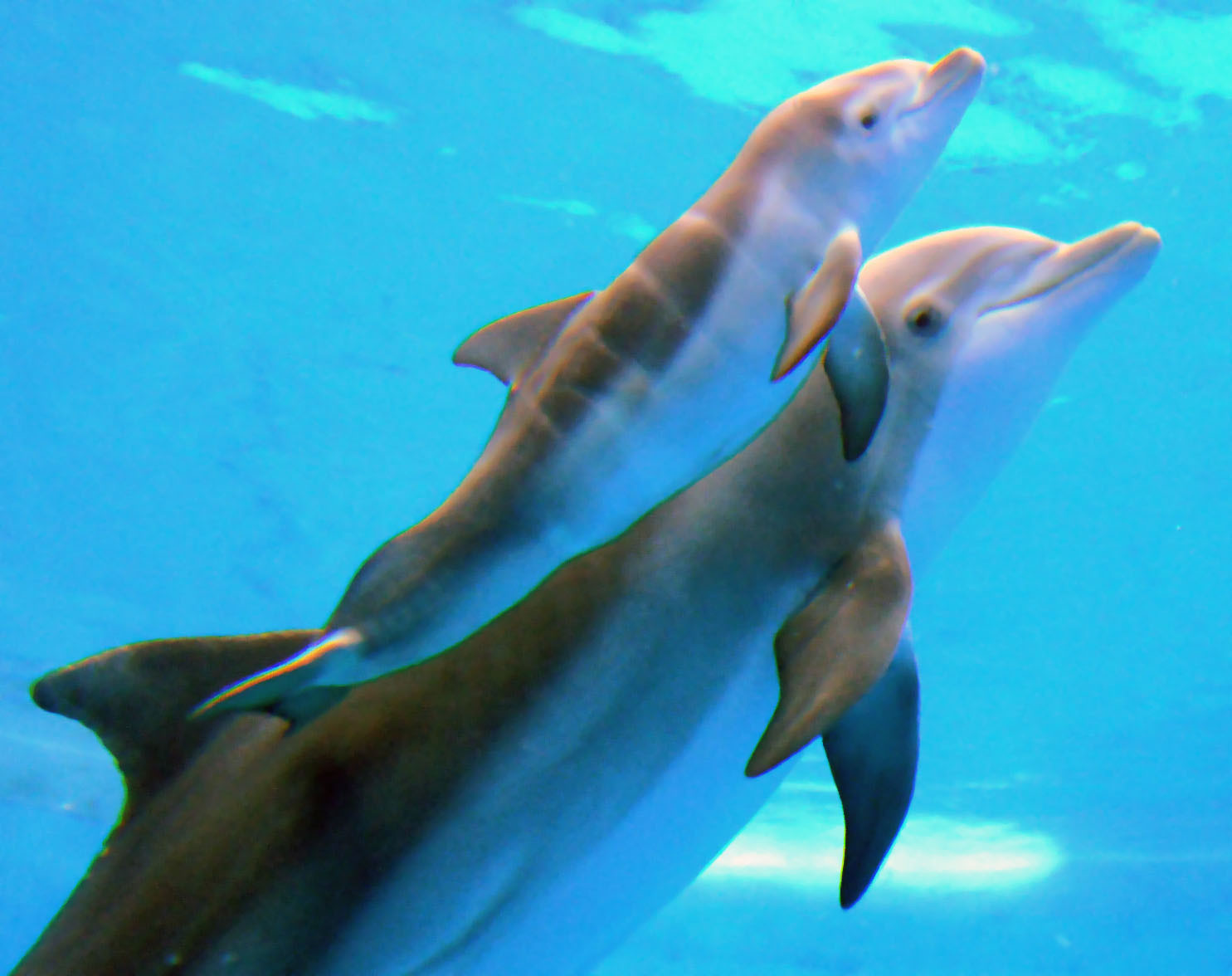 images of baby dolphins - photo #23
