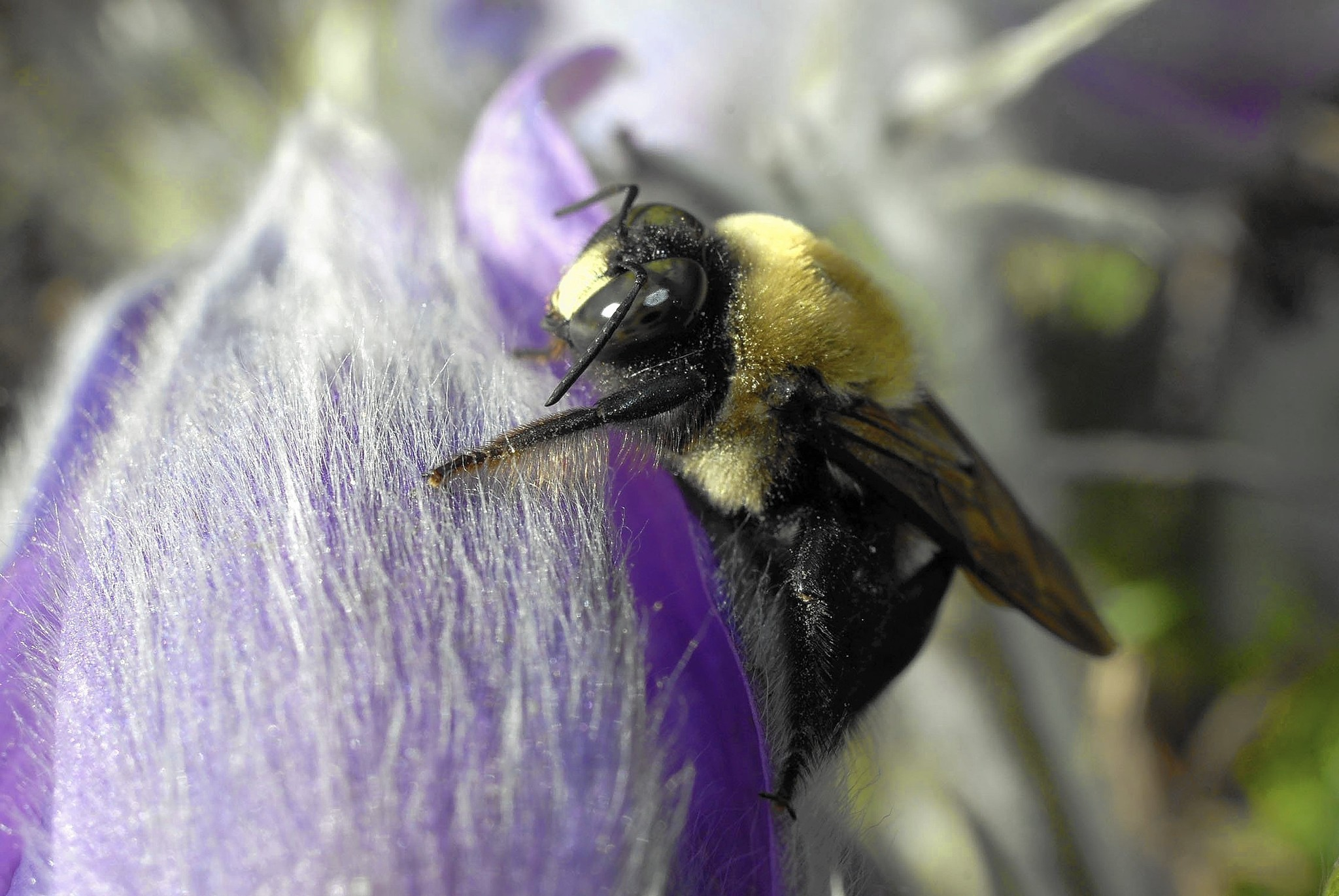 Attract bees to your garden by installing nesting block ...