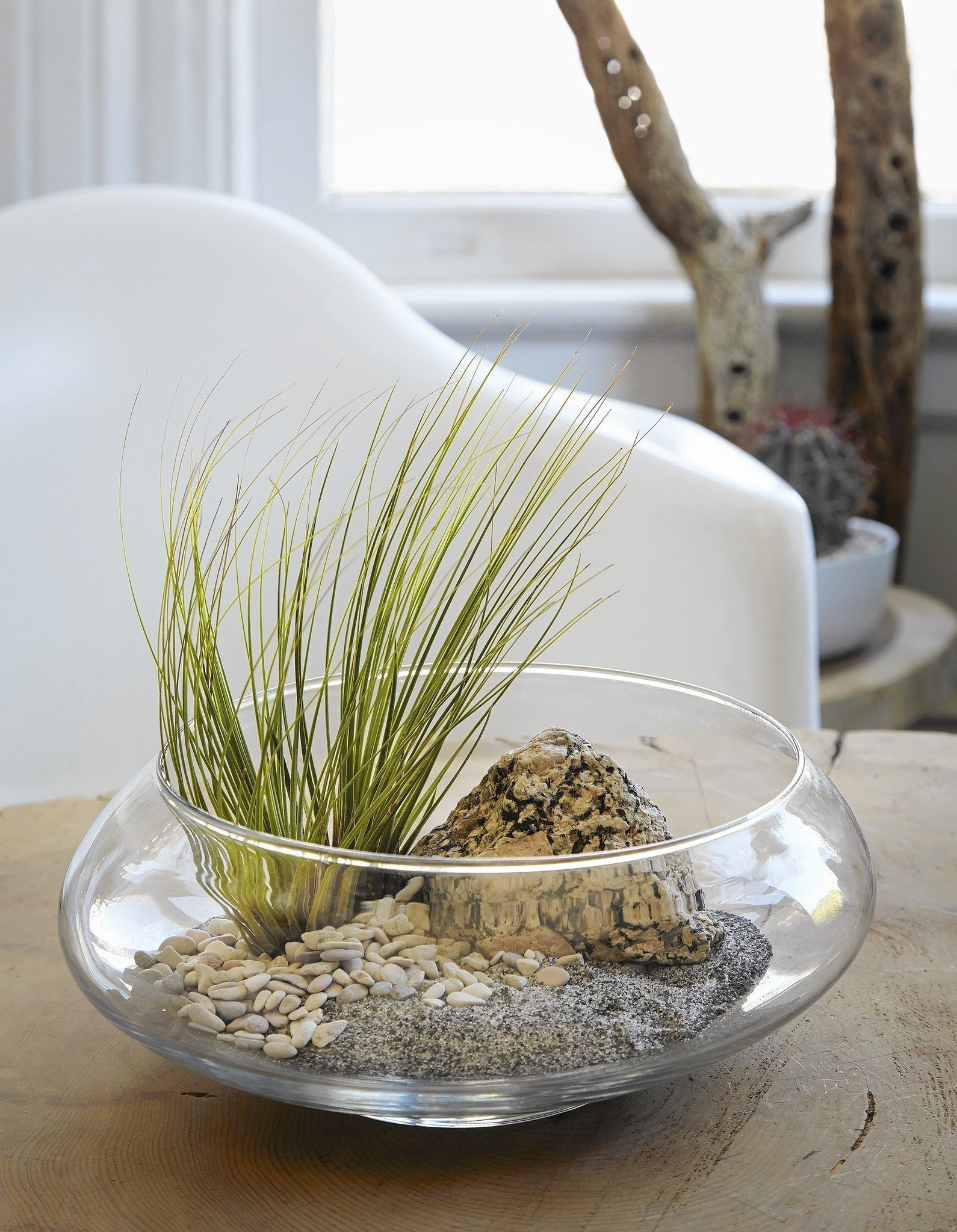 Best 30 Air Plants in West Chicago, IL with Reviews - YP.com