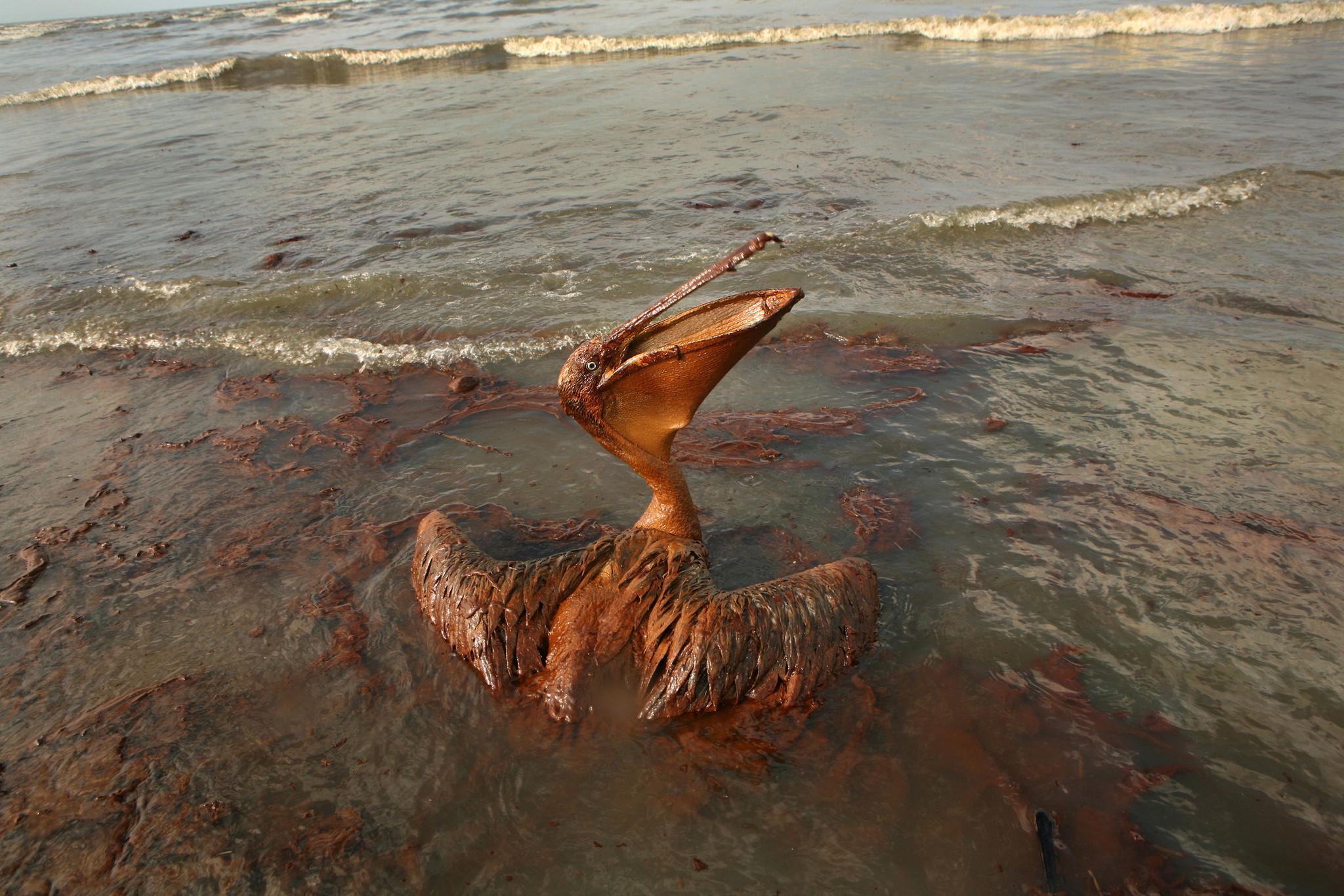 Deepwater Horizon oil spill of 2010