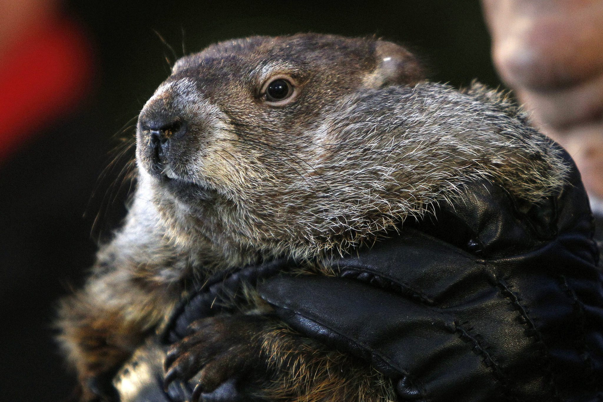Groundhog Day: Punxsutawney Phil 'forecasts' 6 more weeks ...